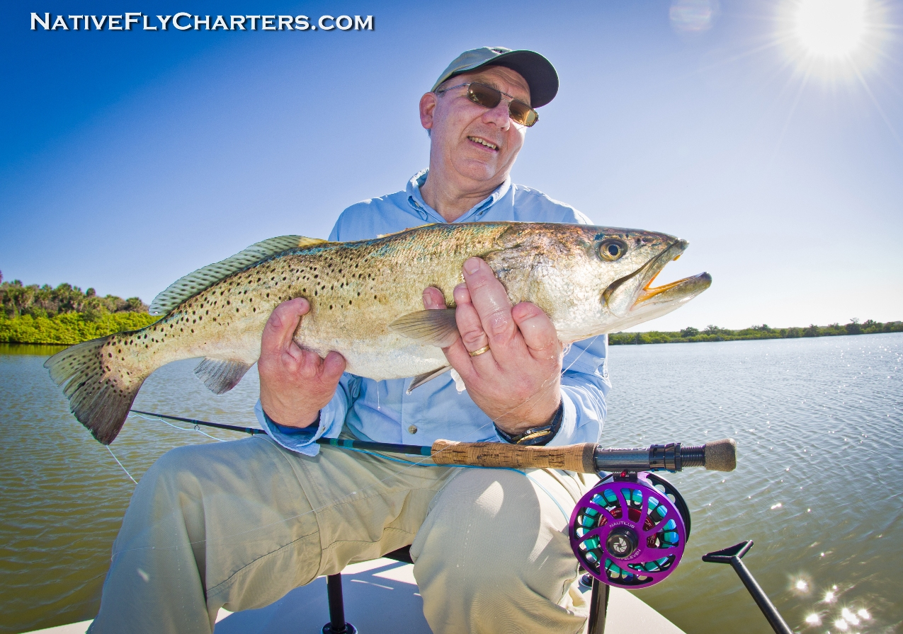 Sea Trout on fly