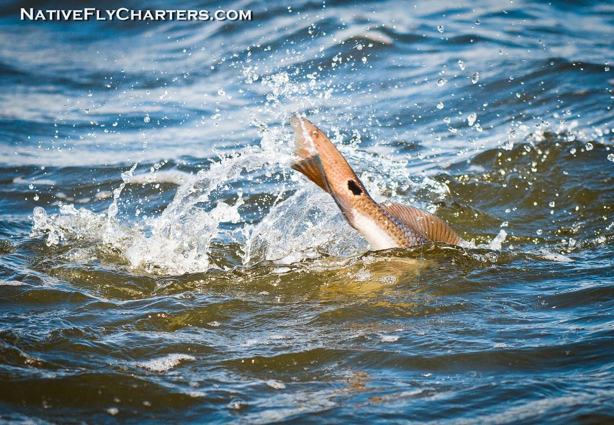 Mosquito Lagoon Redfish guide