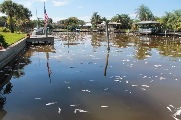 INDIAN-RIVER-LAGOON-DEAD-FISH-IN-COCOA-BEACH_BY-AMY-GREEN