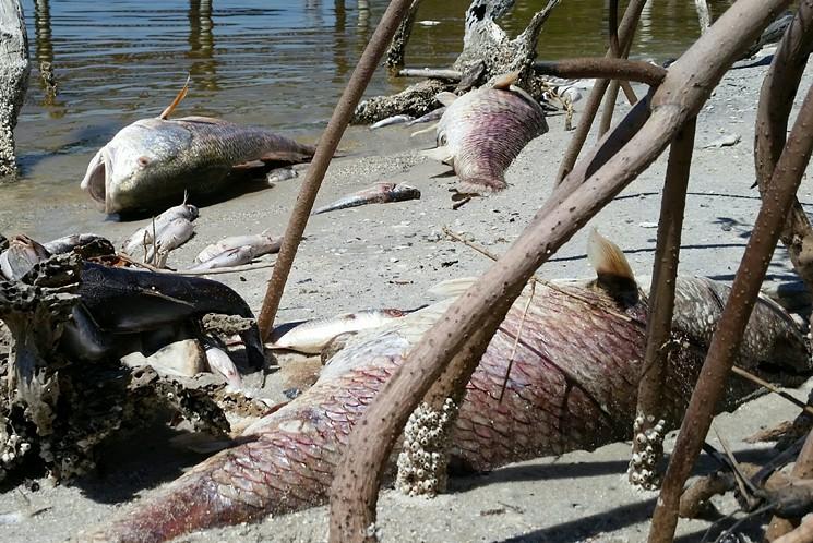 indian-river-fish-kill